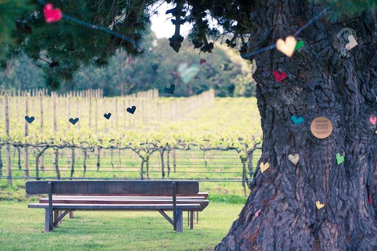 Weddings Australia - Mornington peninsula - Vineyard Wedding