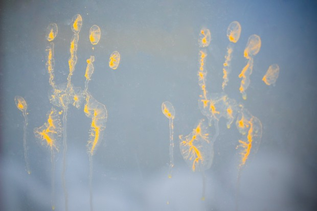 window hand prints